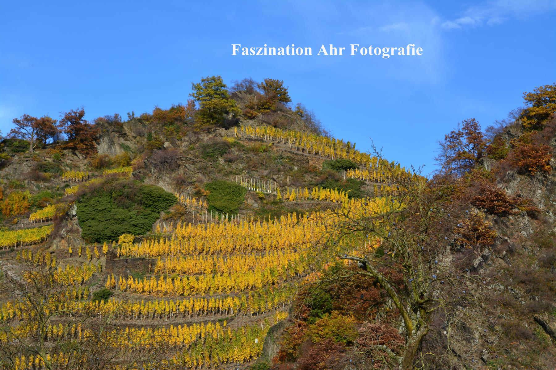 Herbstbilder16