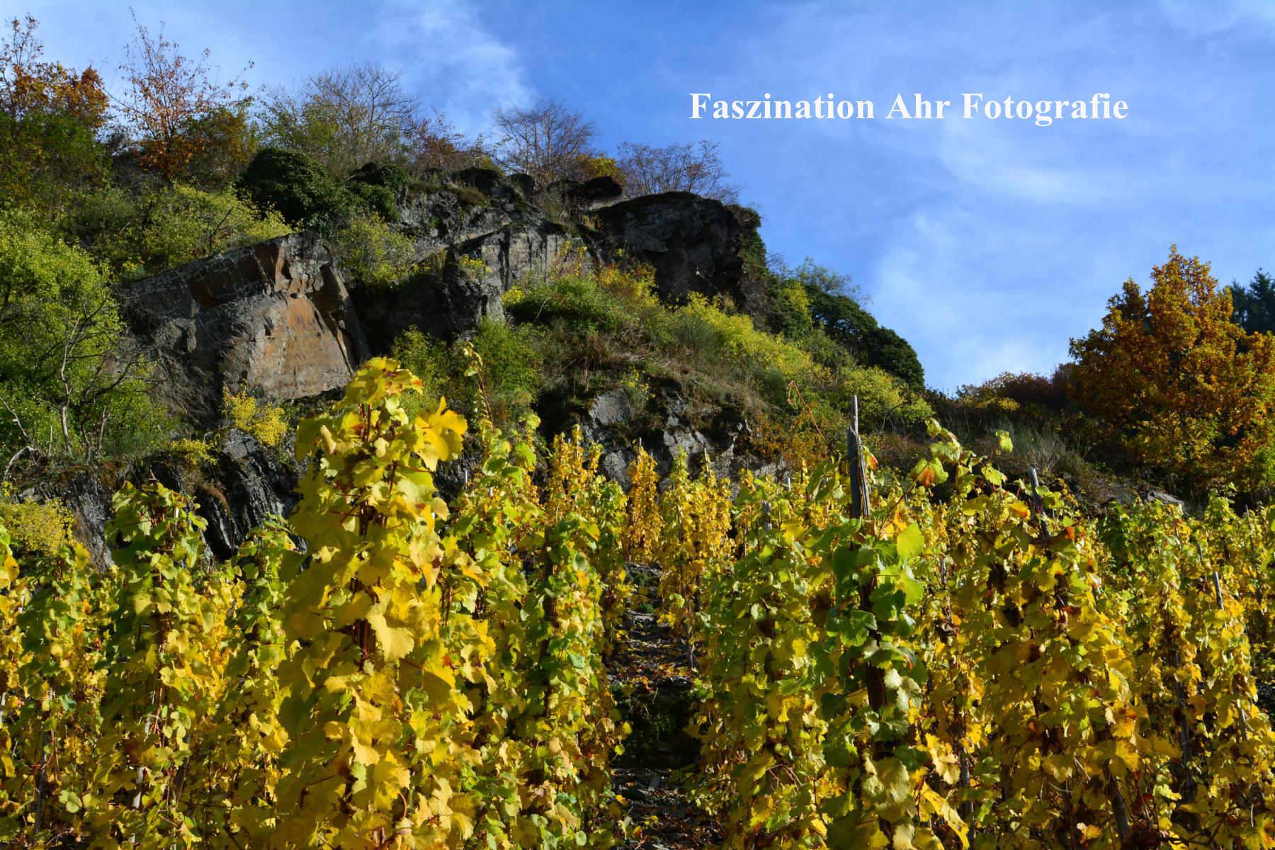 Herbstbilder6