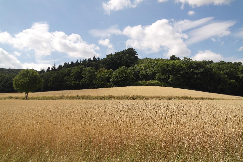 Felder am Laacher See