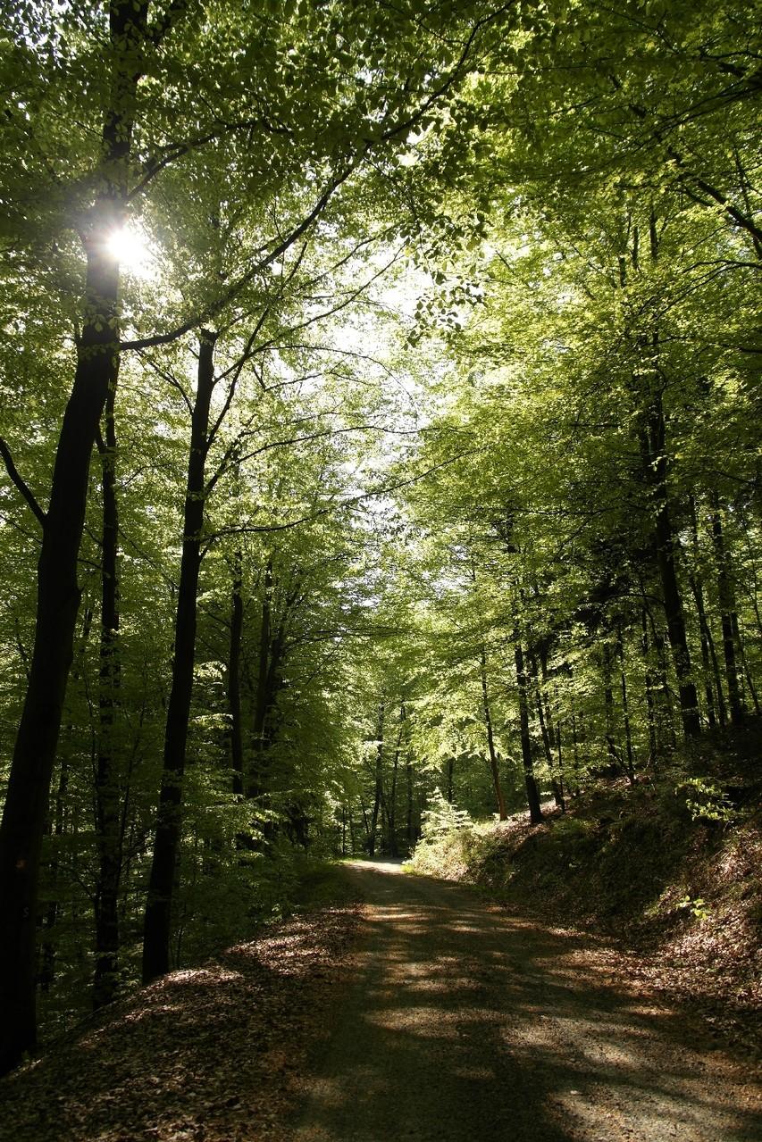 Der Försterweg im Leuscheider Wald