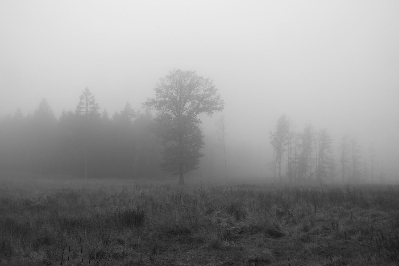 Leuscheider Heide bei Nebel