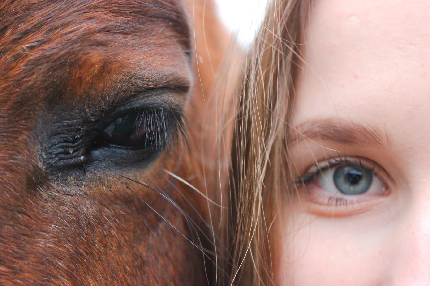"""Ma r i e Oberdick """"Pferde geben uns die Flügel, die wir nicht haben."""""""