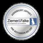 Hundeschule Hamburg positives Training Hundetraining zertifiziert §11