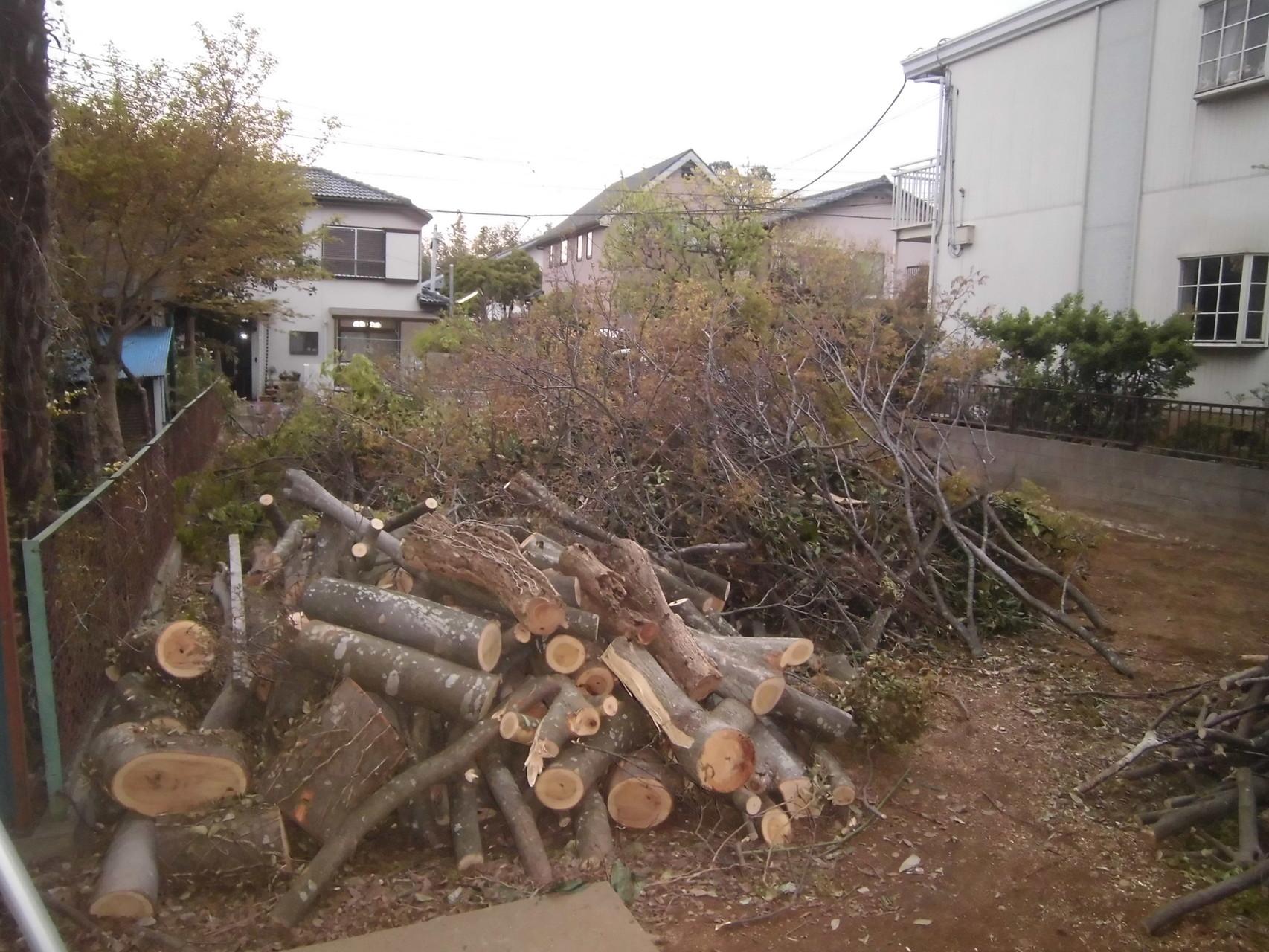 伐採後、搬出用に細かく裁断した枝、幹
