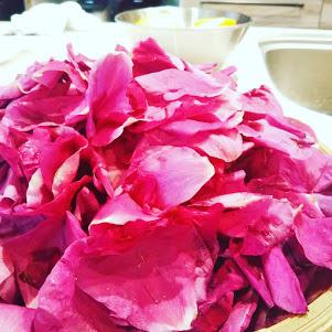 ハマナスの花びら