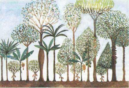 Agroforestry Permaculture