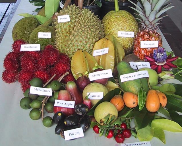Fruit varieties