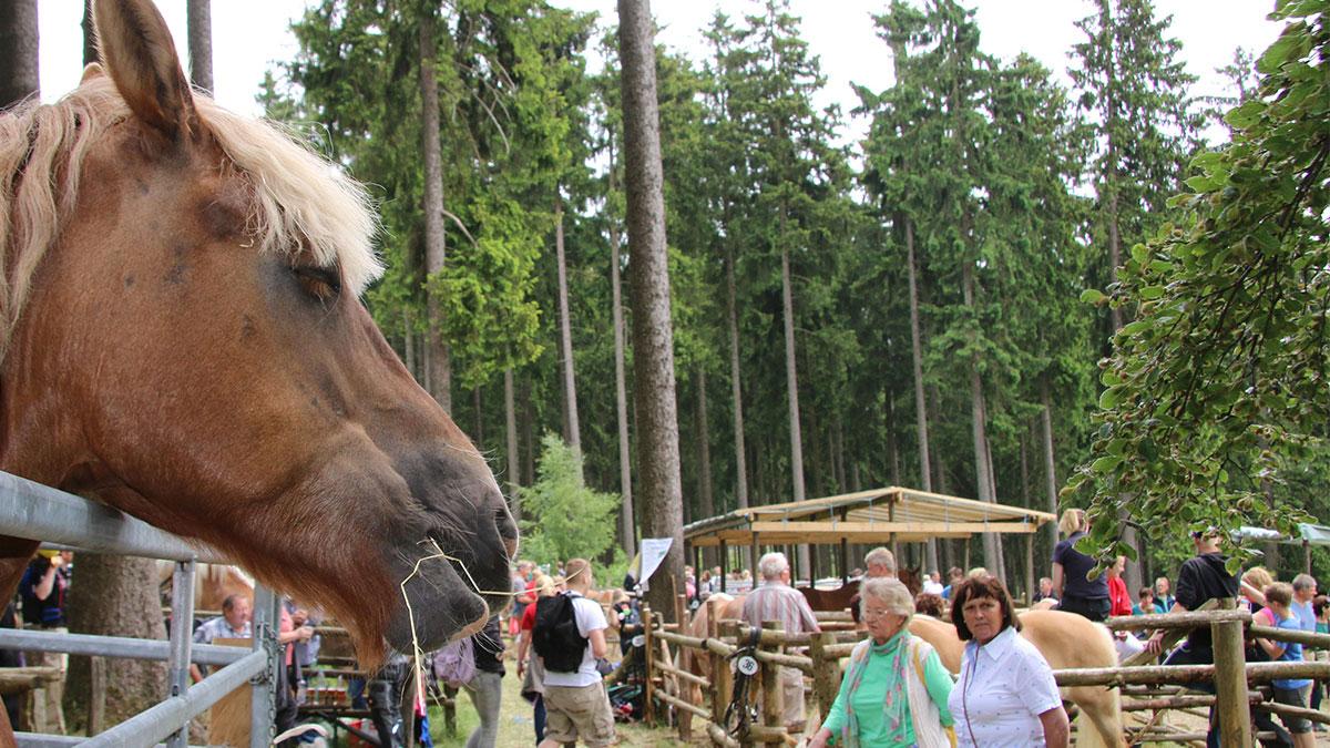 Kreistierschau auf dem Stünzel - das älteste Volksfest in Wittgenstein