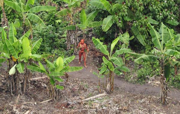 Ein unkontaktierter Indigener in einer Luftaufnahme, die 2011 um die Welt ging. Foto: © G. Miranda/FUNAI/Survival