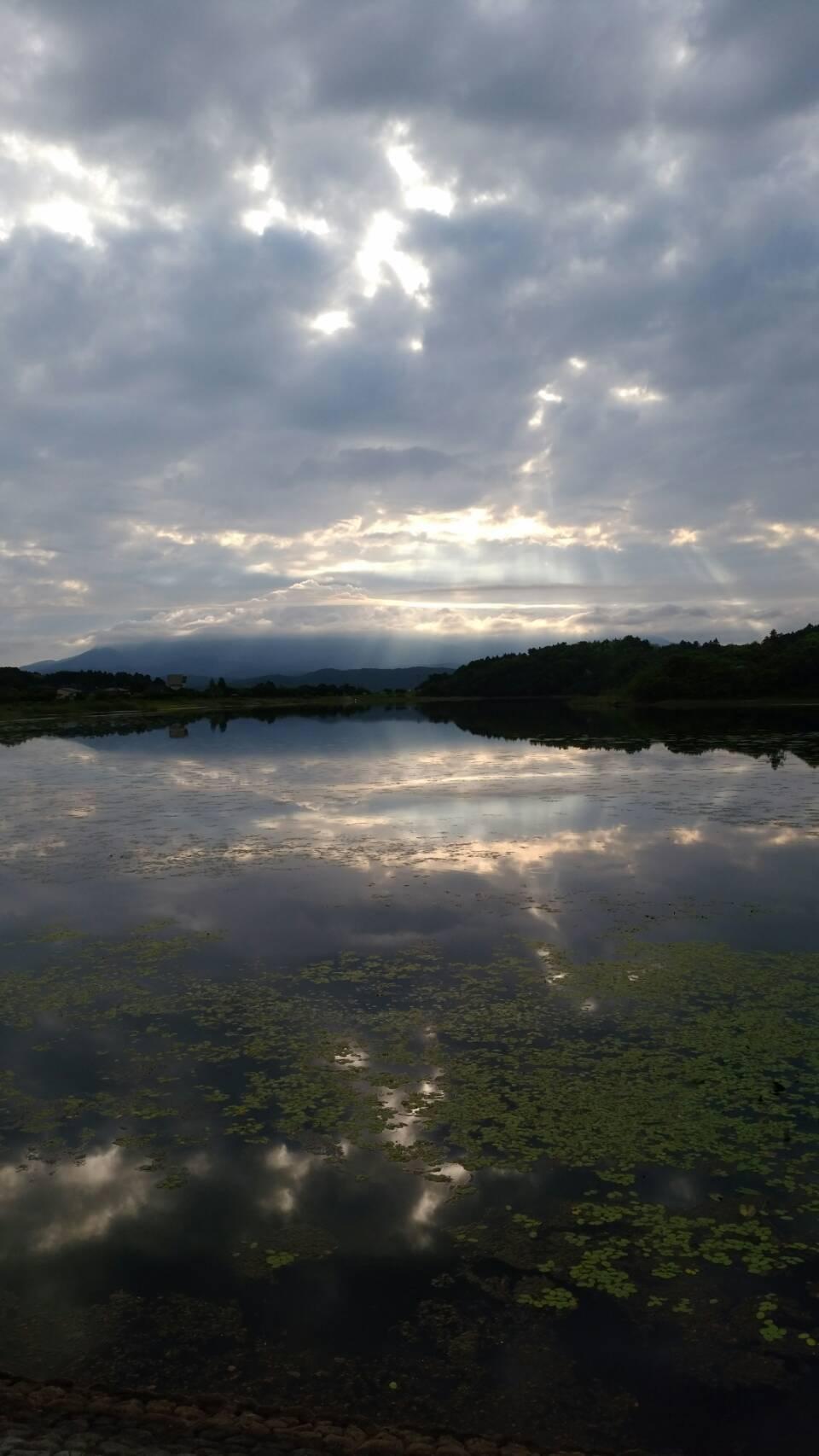 久しぶりの曇りの早朝