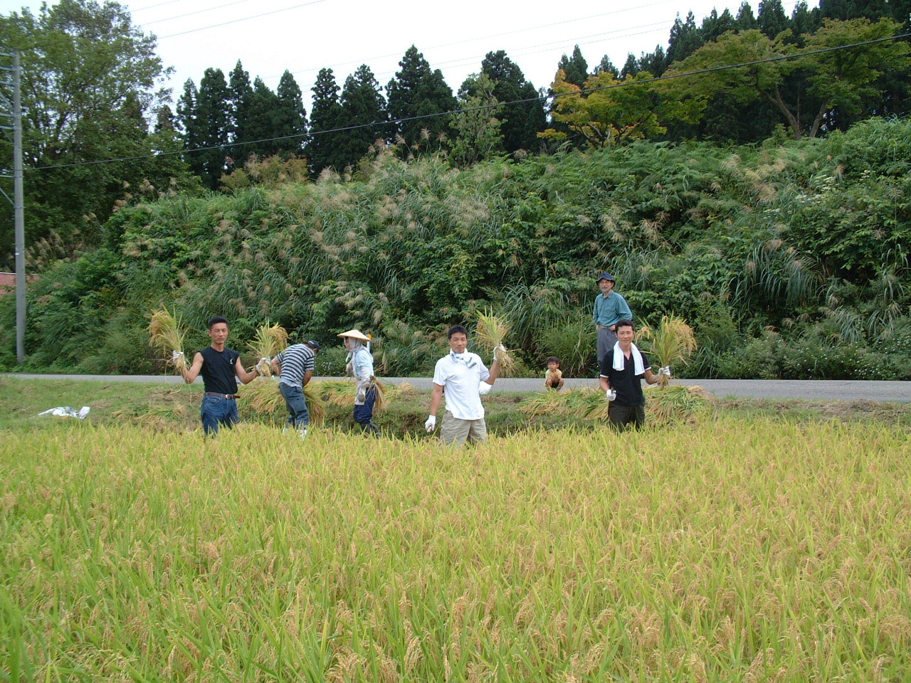 実った酒米を 皆で稲刈りも楽しい一時