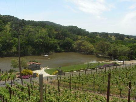 小さな池に面したこのブドウ畑から、Sciandriのワインが生まれるそうです。