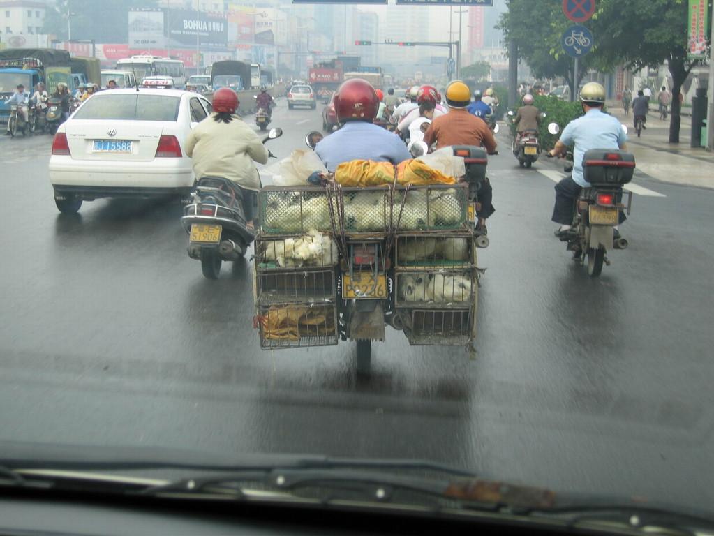 Hühnertransport