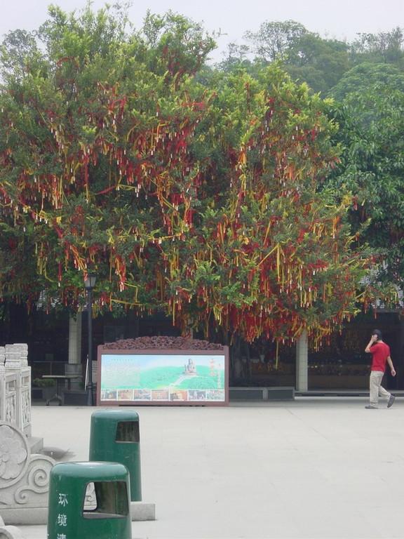 Baum mit Gebetsfahnen
