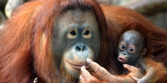 Klick hier: Borneo