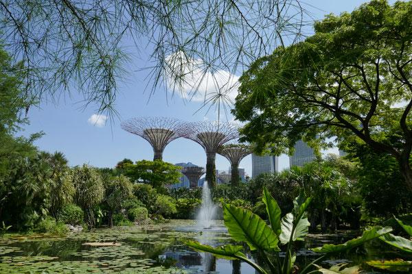 Supertrees - Garten der Zukunft - Singapur - travelumdiewelt.de