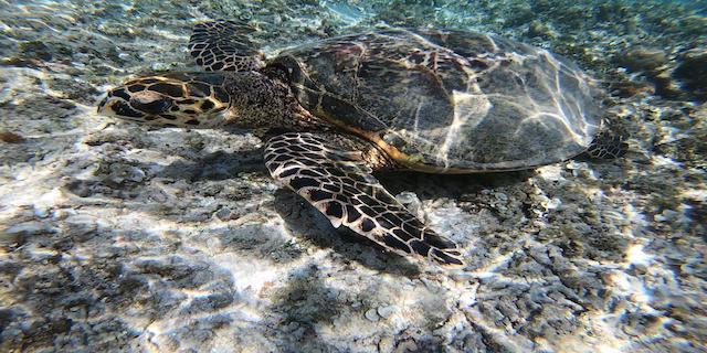 Klick hier: Lombok/Gili Inseln
