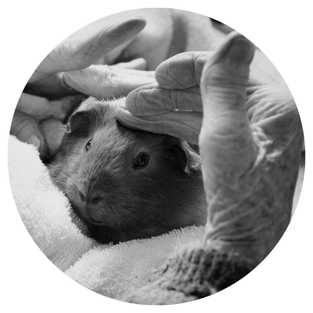 La médiation animale : accompagner en douceur les fragilités humaines
