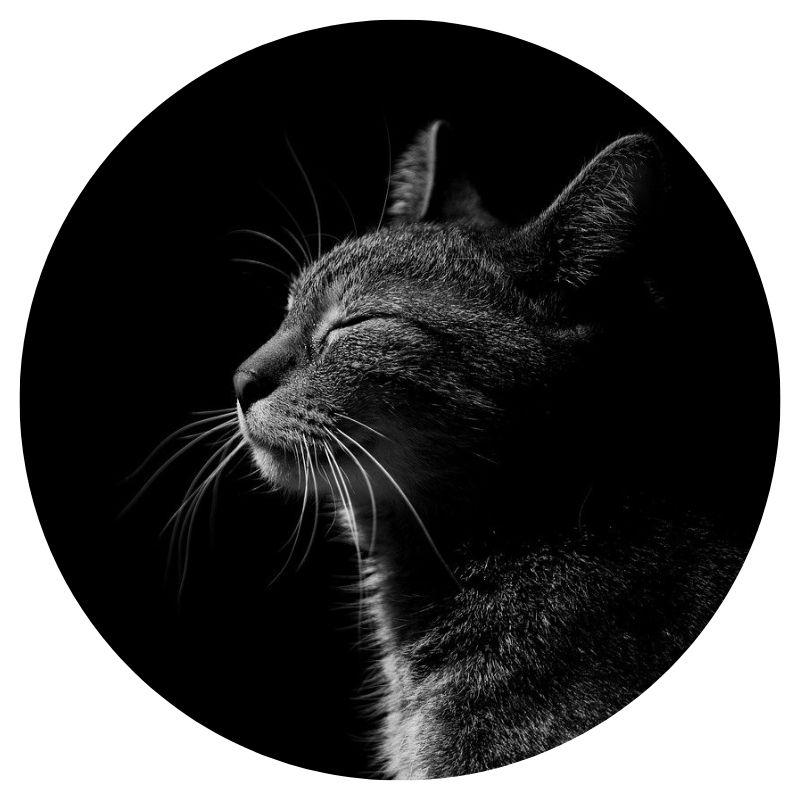 Les animaux sont-ils sensibles au magnétisme ?