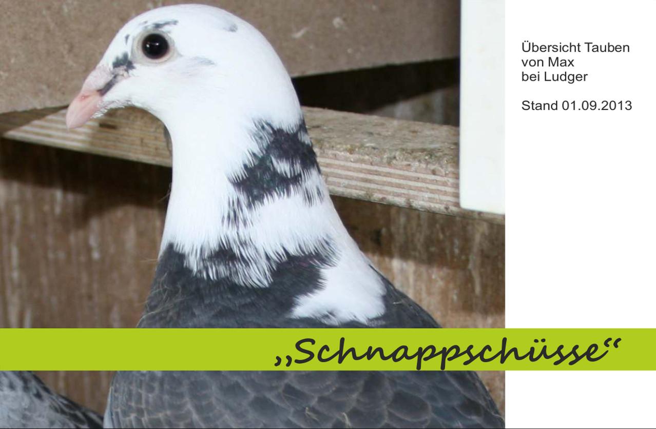 Projekt Schildige-Weitstrecken-Briftauben Nachzucht -2013
