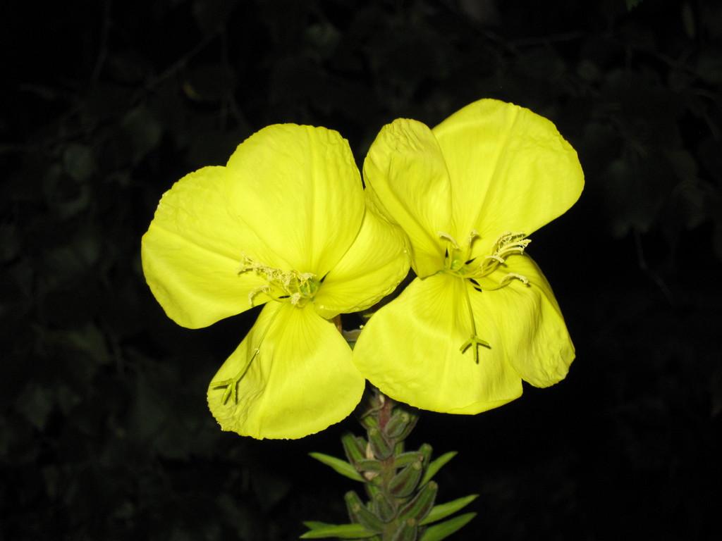 Manche Blumen blühen sogar nachts und sind tagsüber geschlossen.