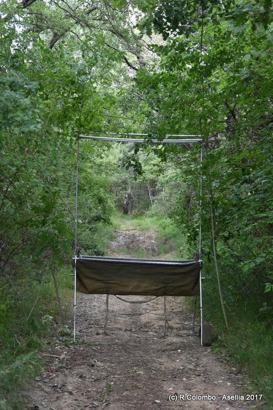 Capture au harp trap