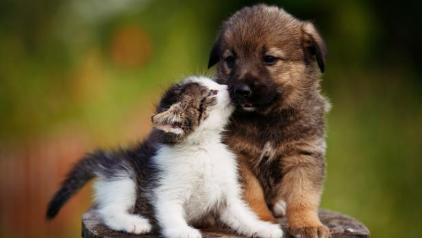 An adoption of love