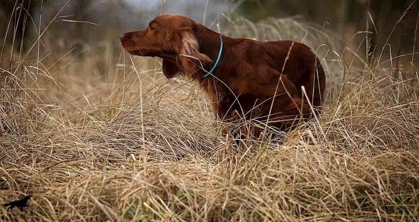 Coppersheen Eira, Foto Michael Schlenter