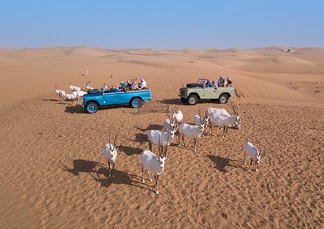 Safari im 1950er Land Rover