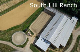 Reinhard Hochreiter trainiert Reining-Pferde auf der South Hill Ranch in Steyregg.