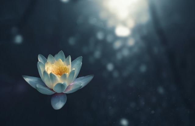 Achtsamkeit Meditation Bemerken Gefühl Blume Licht
