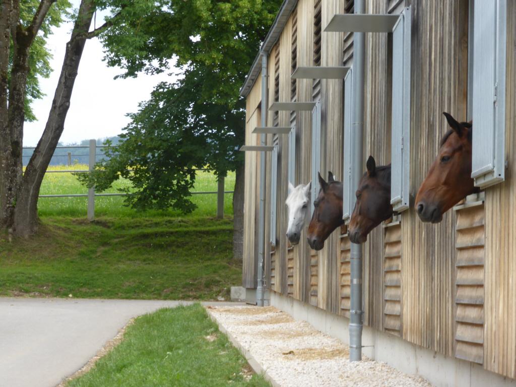 Pferde in Marbach