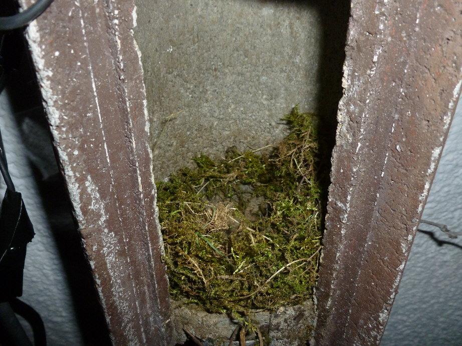 Das Nest nach nur sechs Stunden Nistzeit