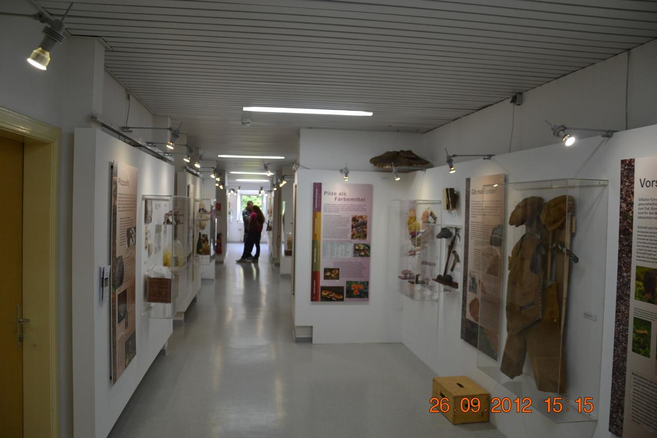 ...letzter Blick auf einen Teil der Pilz - Ausstellung im Biologiezentrum Linz!