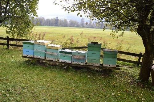 Zum Abschluß im Bienenmuseum...