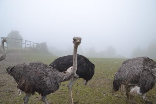 Die Tiere empfangen uns mit respektvoller Neugier....