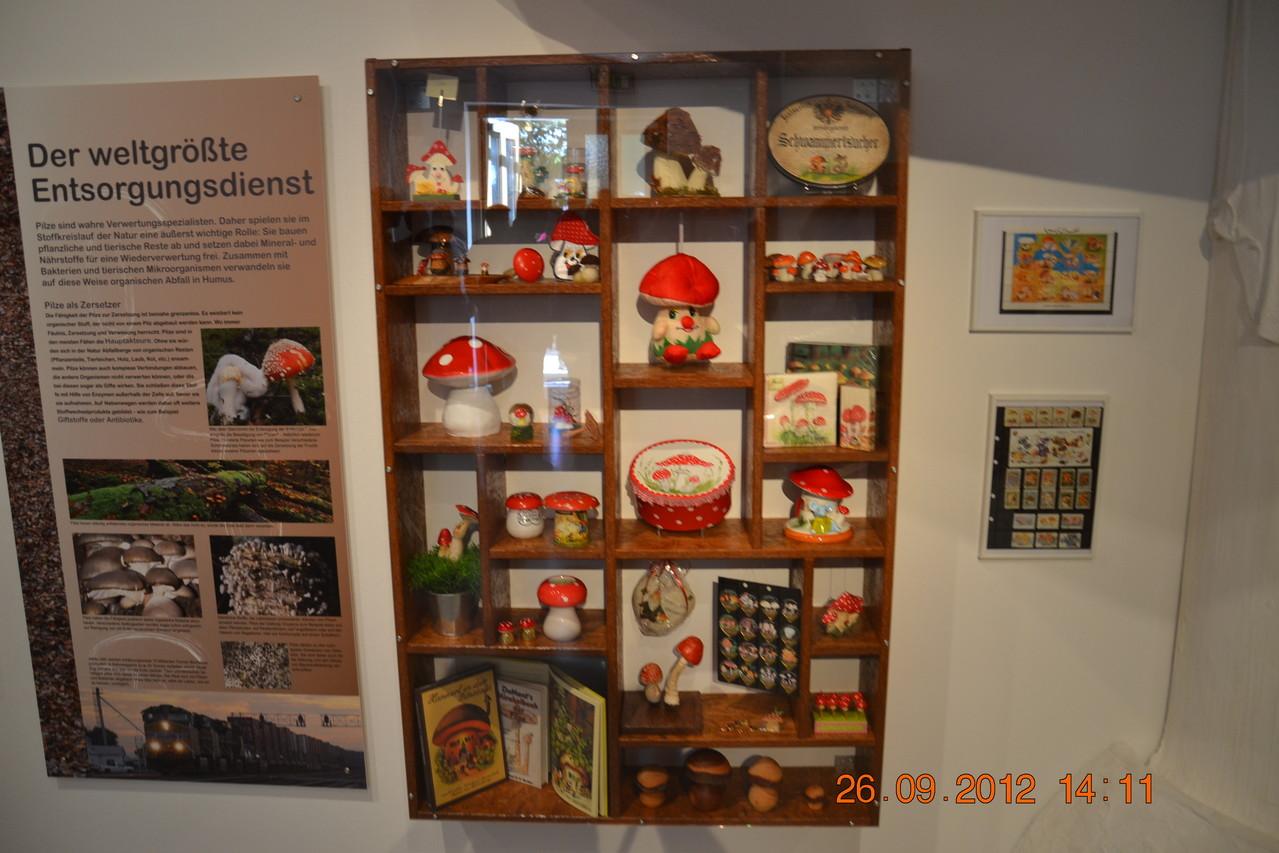 Pilzraritäten aus der Ausstellung