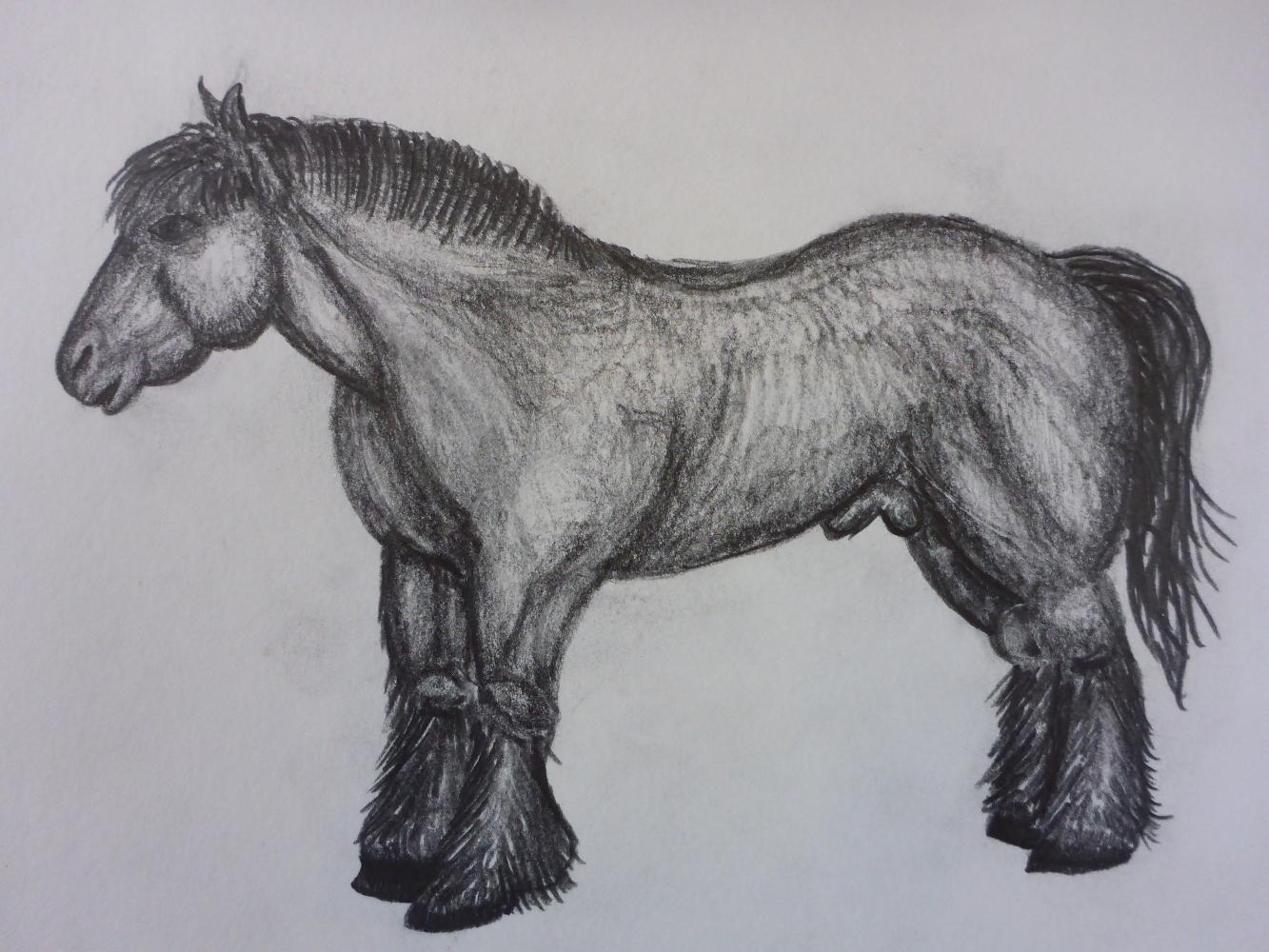 """Stallion II"", 2018, pencil on paper, 30 x 21 cm"