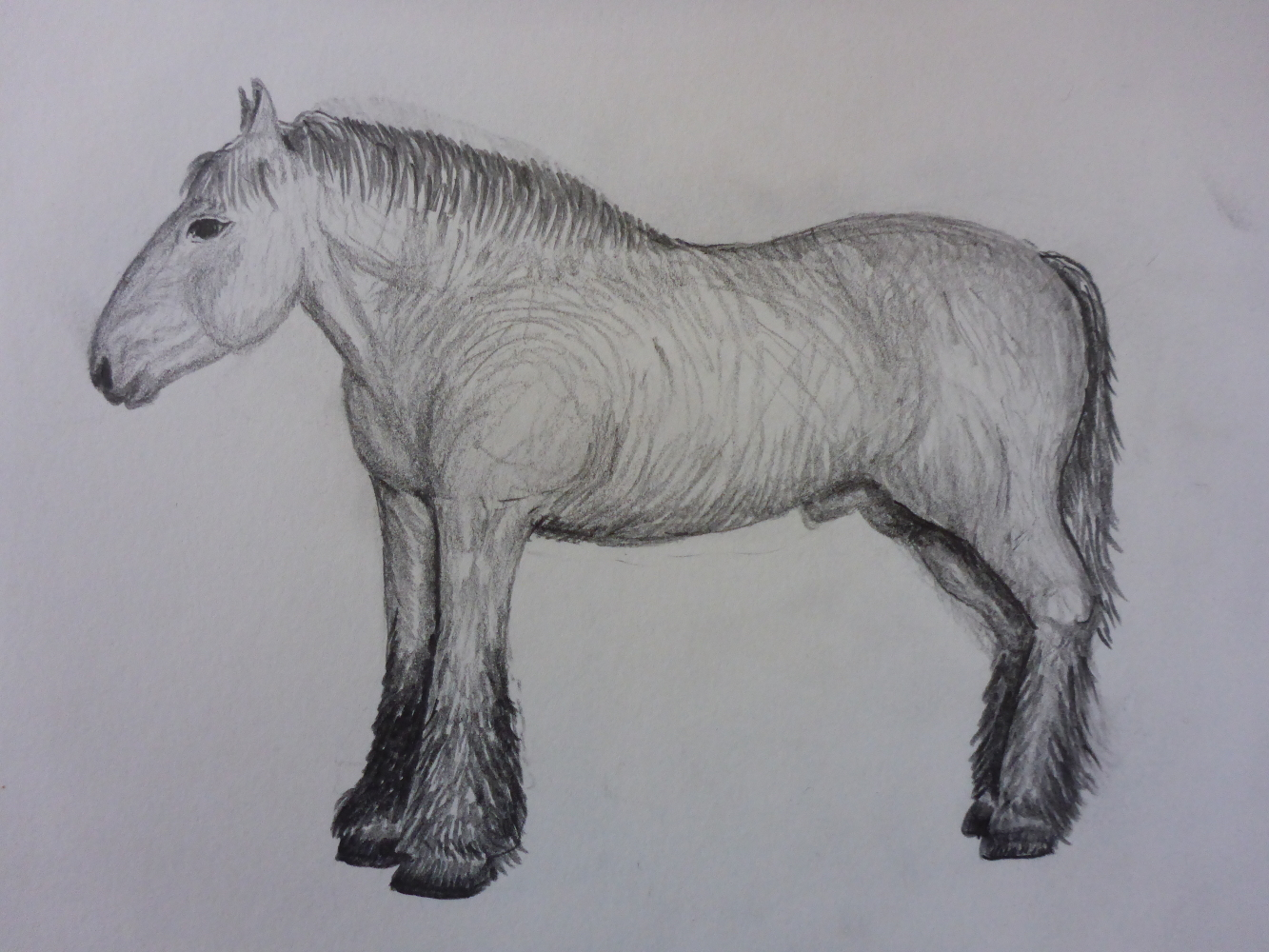 """Stallion I"", 2018, pencil on paper, 30 x 21 cm"
