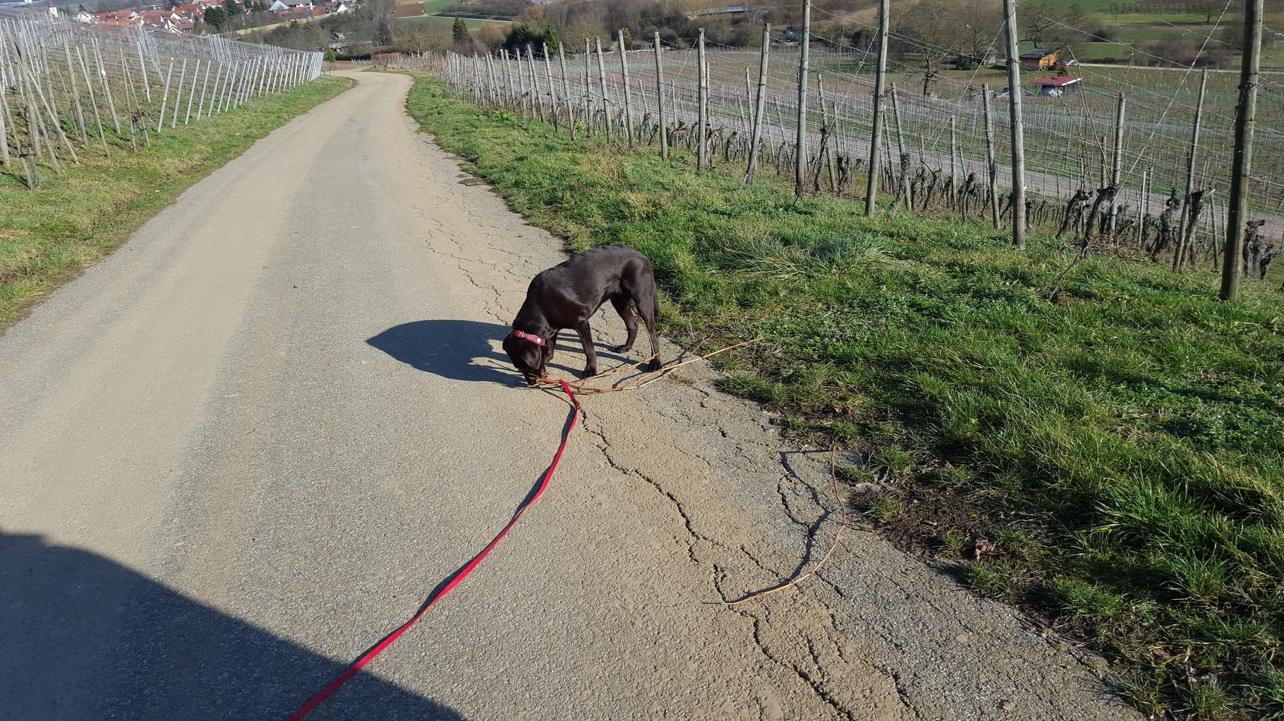 Spaziergang durch den Weinberg