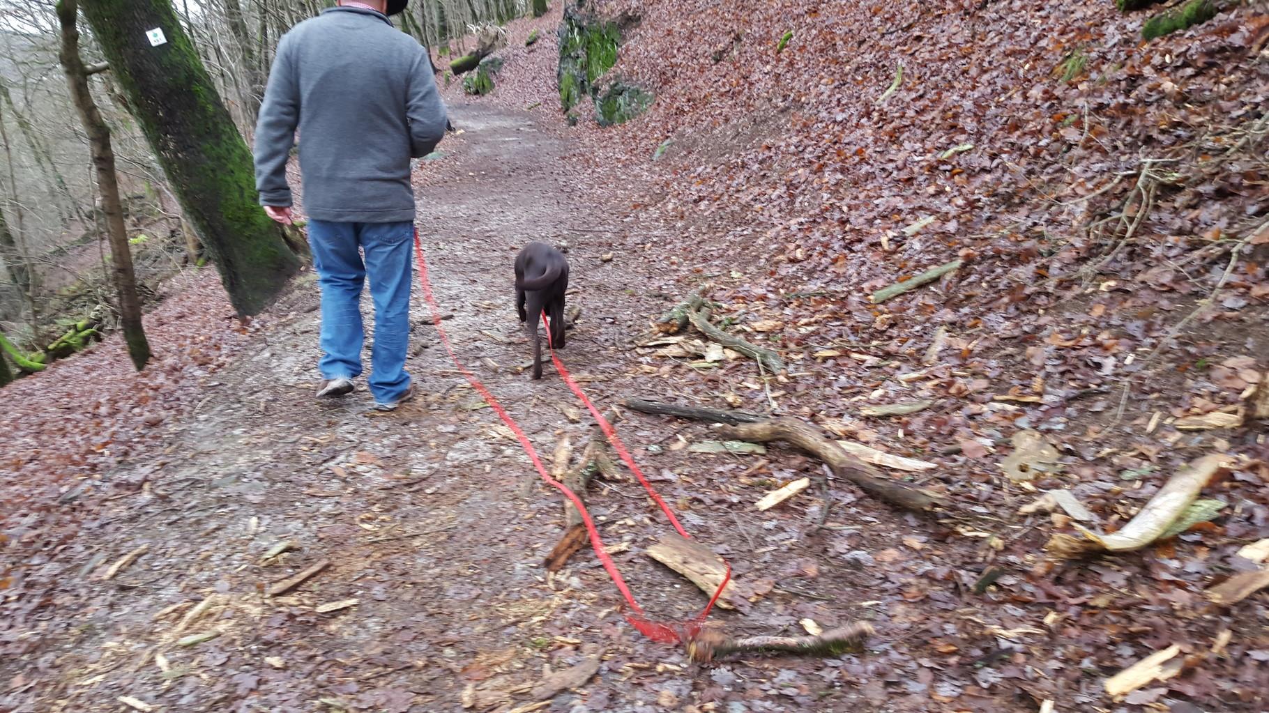 Spaziergang durch den Wald...Rundweg um die Burg...wie jetzt, ich darf das Stöckchen nicht mitnehmen. Schaaaaade!