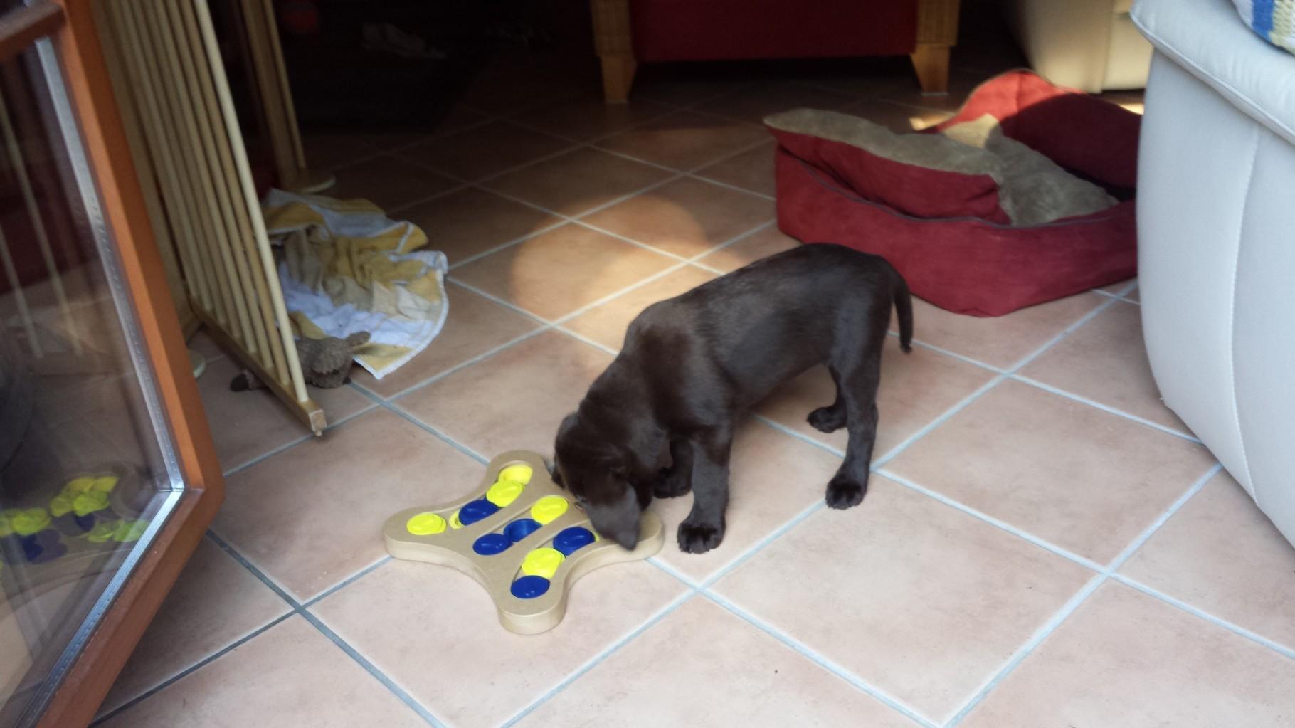Hmmm...ich rieche die Leckerchen...das neue Spielzeug von Mama und Papa ist ja super.