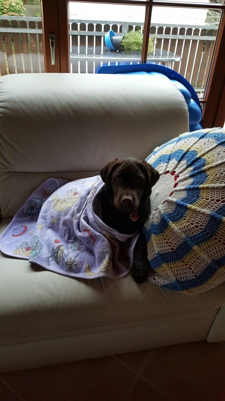 und jetzt liege ich bequem auf seinem Sofa...er hat mich toll eingewickelt...das gefällt mir sehr...