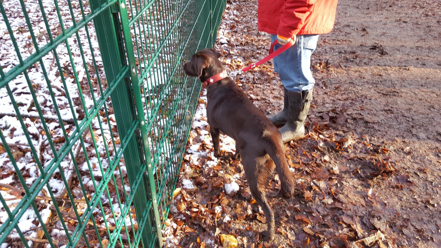 Mit der Hundeschule im Wildgehege...warum ist da nur dieser dumme Zaun...ich würde doch so gerne mit den anderen Tieren spielen...
