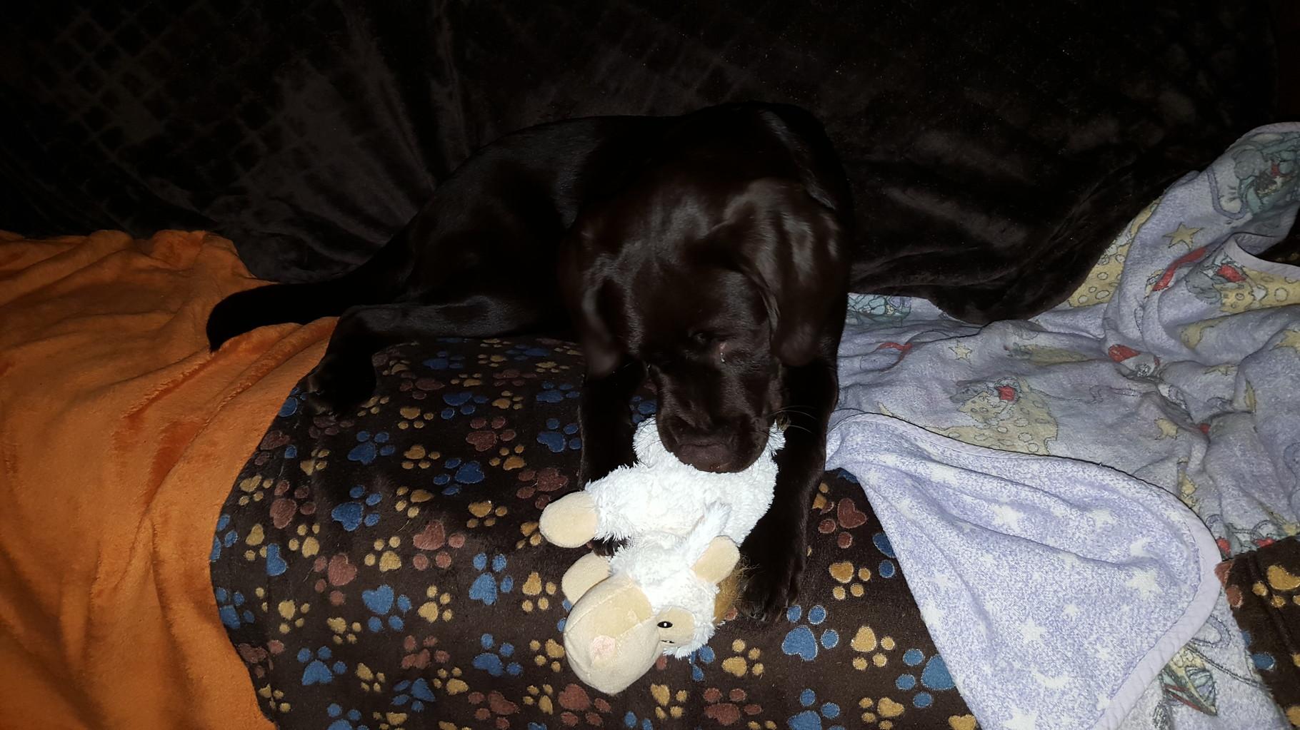 Mein Spielzeug und ich...