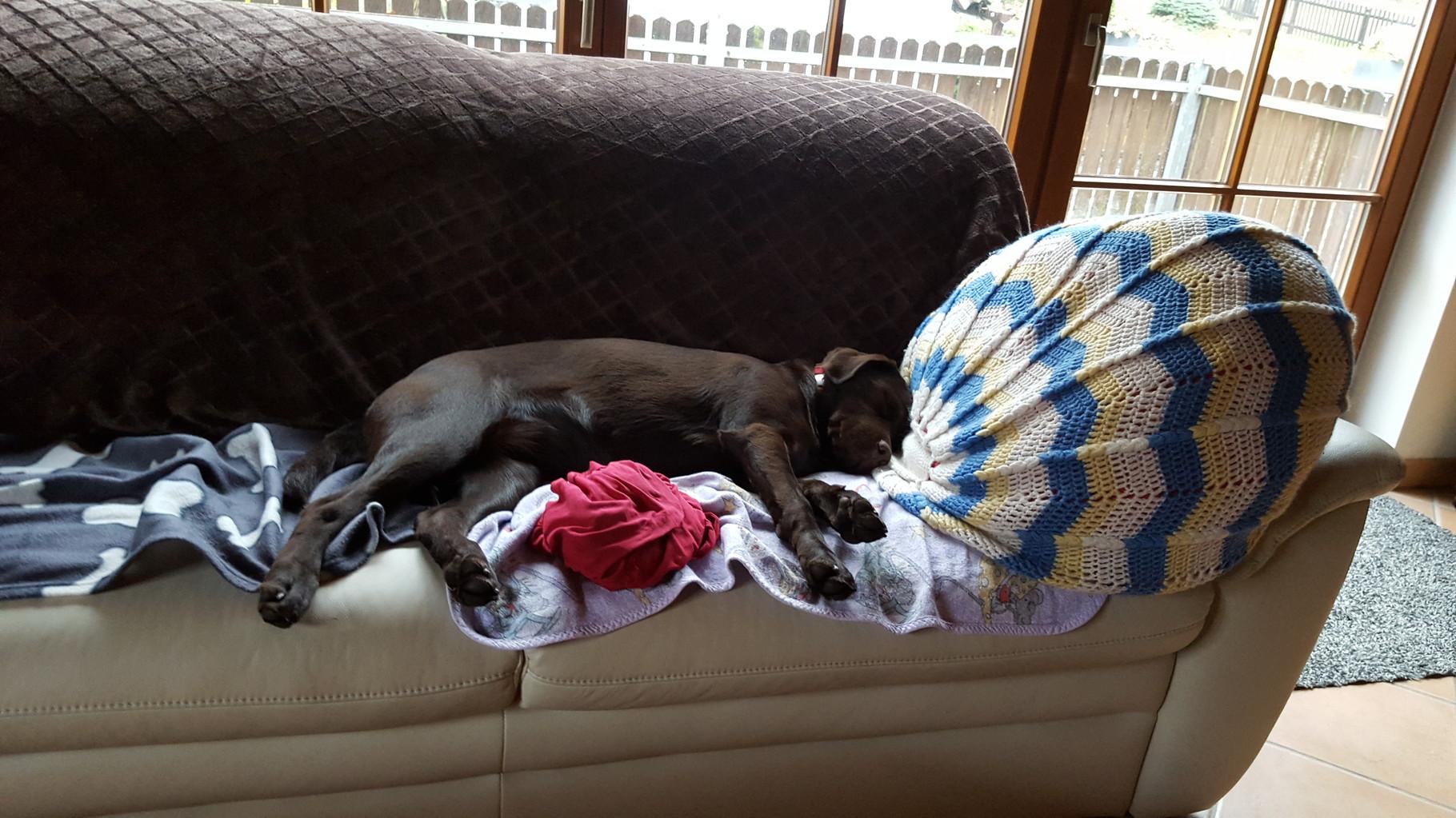 Juhu, ich habe Papa's Sofa ganz für mich alleine.