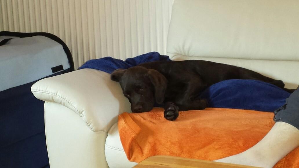 Bei Papa auf dem Sofa schläft es sich super.