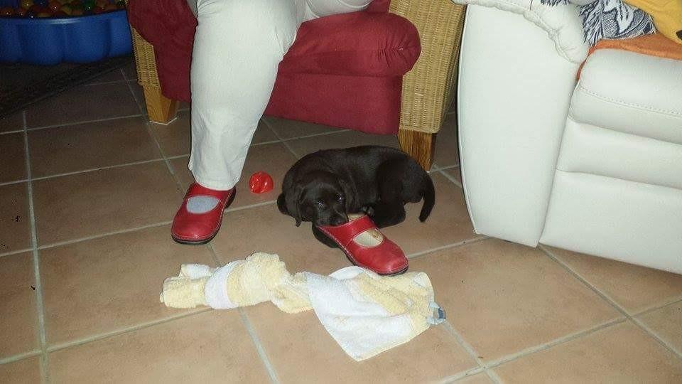Mama's Schuh riecht gut und ist ne ideale Auflage...