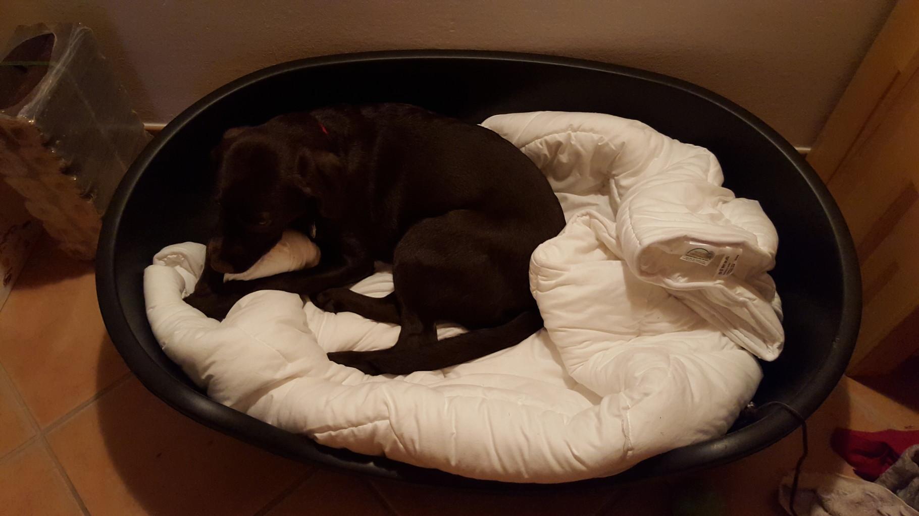Warum nur wollen Mama und Papa, dass ich dieses neue Bett benutze?
