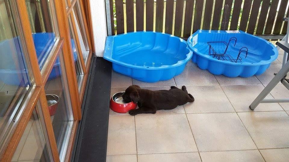 Es ist einfach zu heiß. Ich muss im liegen trinken....